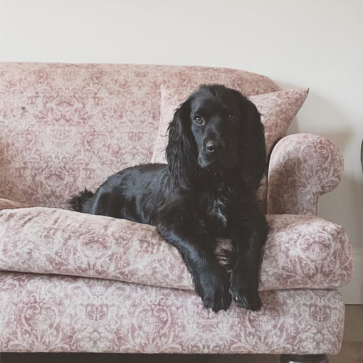 ww/assets/images/ham/customer images/1 Hampton 3 Seater Sofa in Grace linen with a Spaniel